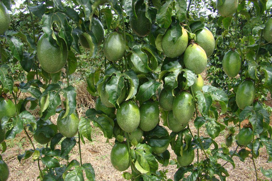 Biovontade Produits Autres Huiles Vegetales Maracuja Ou Fruit